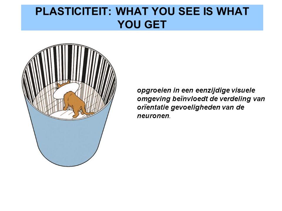 PLASTICITEIT: WHAT YOU SEE IS WHAT YOU GET opgroeien in een eenzijdige visuele omgeving beïnvloedt de verdeling van orïentatie gevoeligheden van de ne