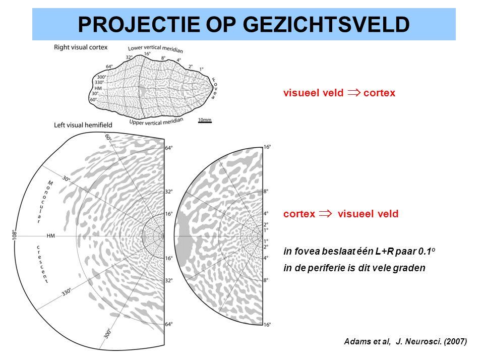 PROJECTIE OP GEZICHTSVELD visueel veld  cortex cortex  visueel veld in fovea beslaat één L+R paar 0.1 o in de periferie is dit vele graden Adams et