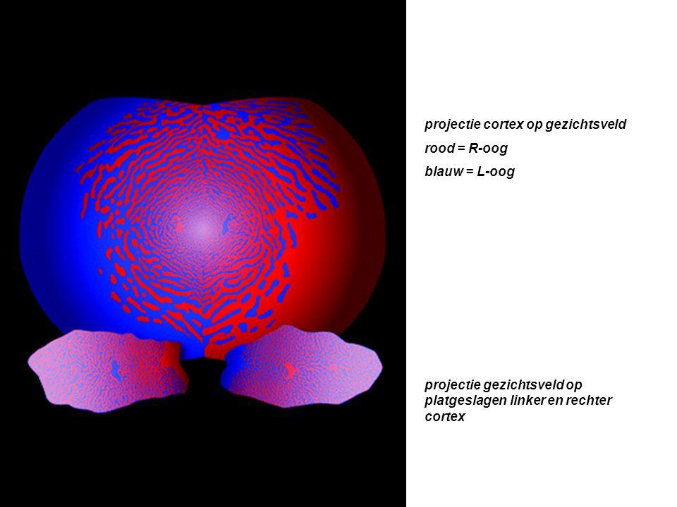 projectie cortex op gezichtsveld rood = R-oog blauw = L-oog projectie gezichtsveld op platgeslagen linker en rechter cortex