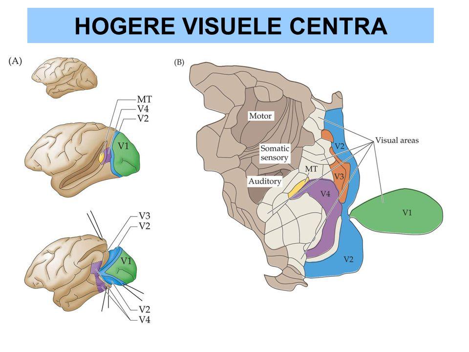 HOGERE VISUELE CENTRA
