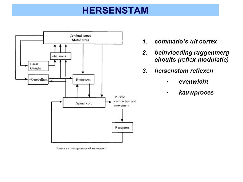 HERSENSTAM 1.commado's uit cortex 2.beinvloeding ruggenmerg circuits (reflex modulatie) 3.hersenstam reflexen evenwicht kauwproces