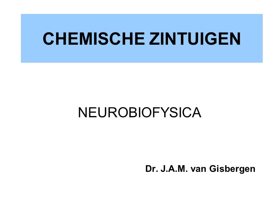 CHEMISCHE ZINTUIGEN NEUROBIOFYSICA Dr. J.A.M. van Gisbergen