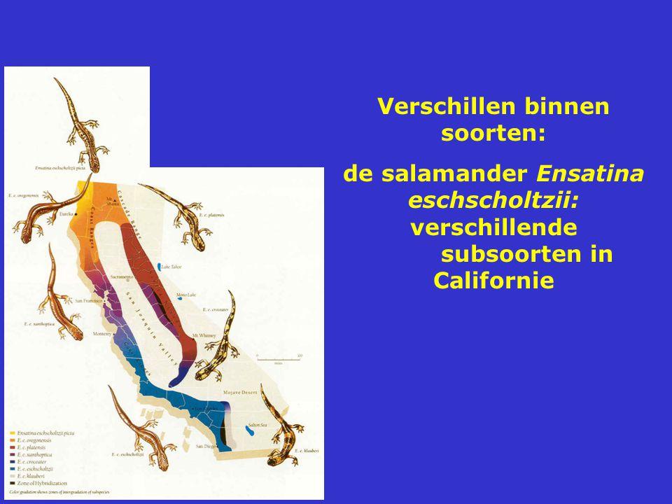 Verschillen binnen soorten: de salamander Ensatina eschscholtzii: verschillende subsoorten in Californie
