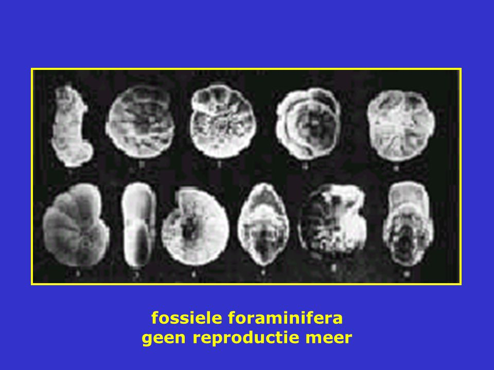 fossiele foraminifera geen reproductie meer