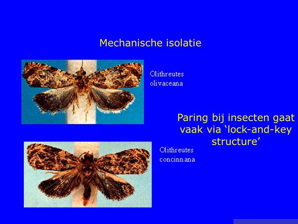 Mechanische isolatie Paring bij insecten gaat vaak via 'lock-and-key structure'