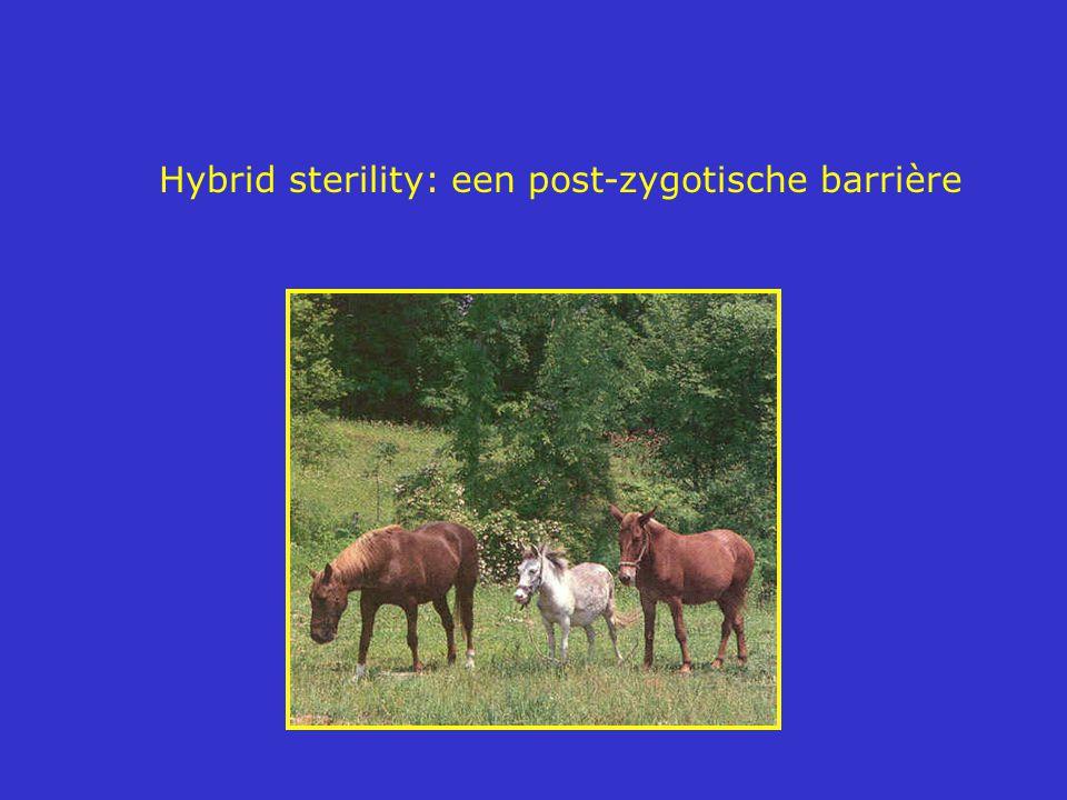 Hybrid sterility: een post-zygotische barrière