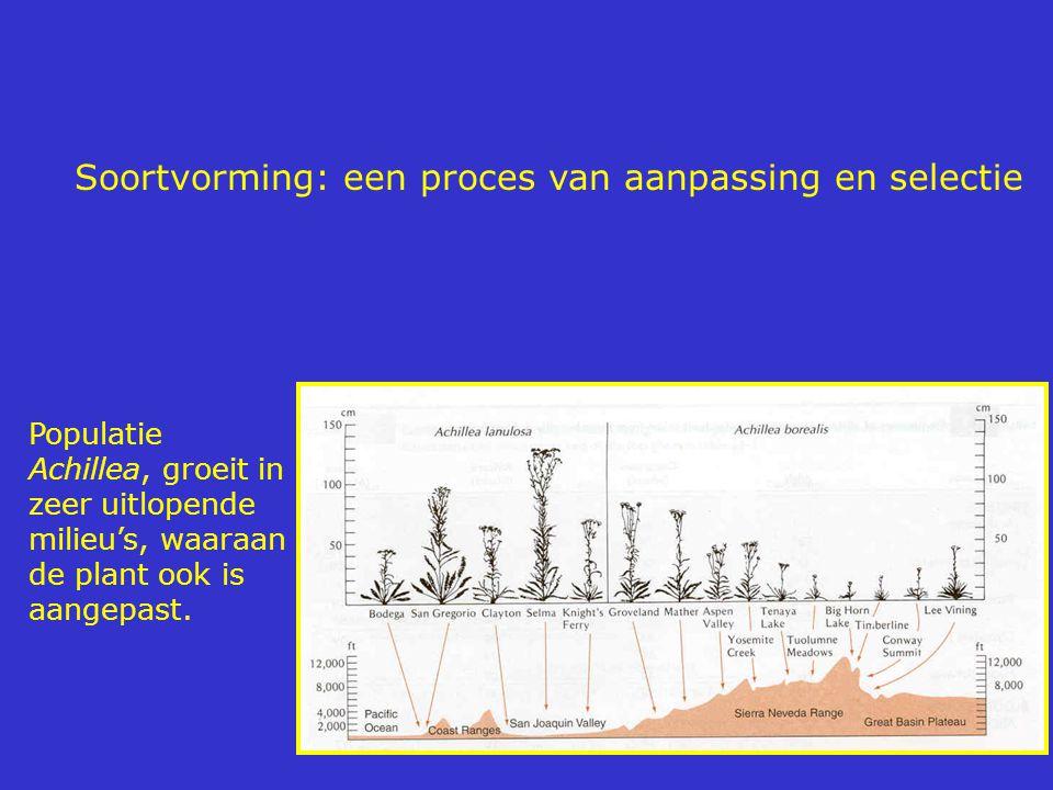Soortvorming: een proces van aanpassing en selectie Populatie Achillea, groeit in zeer uitlopende milieu's, waaraan de plant ook is aangepast.