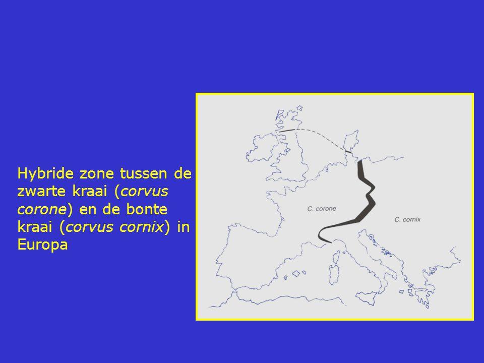Hybride zone tussen de zwarte kraai (corvus corone) en de bonte kraai (corvus cornix) in Europa