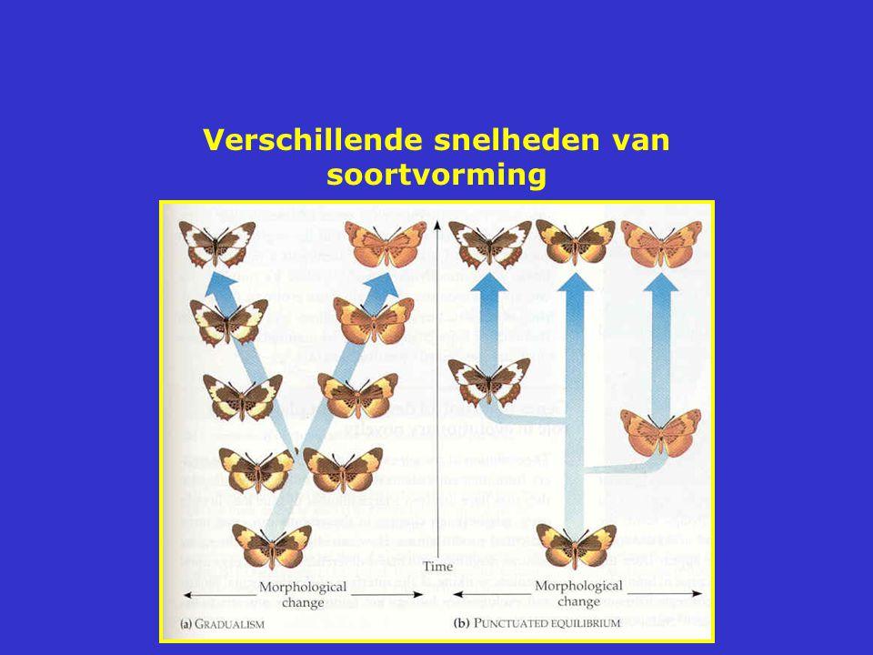 Verschillende snelheden van soortvorming