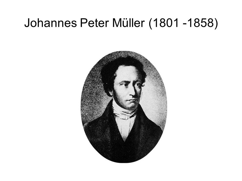 Johannes Peter Müller (1801 -1858)