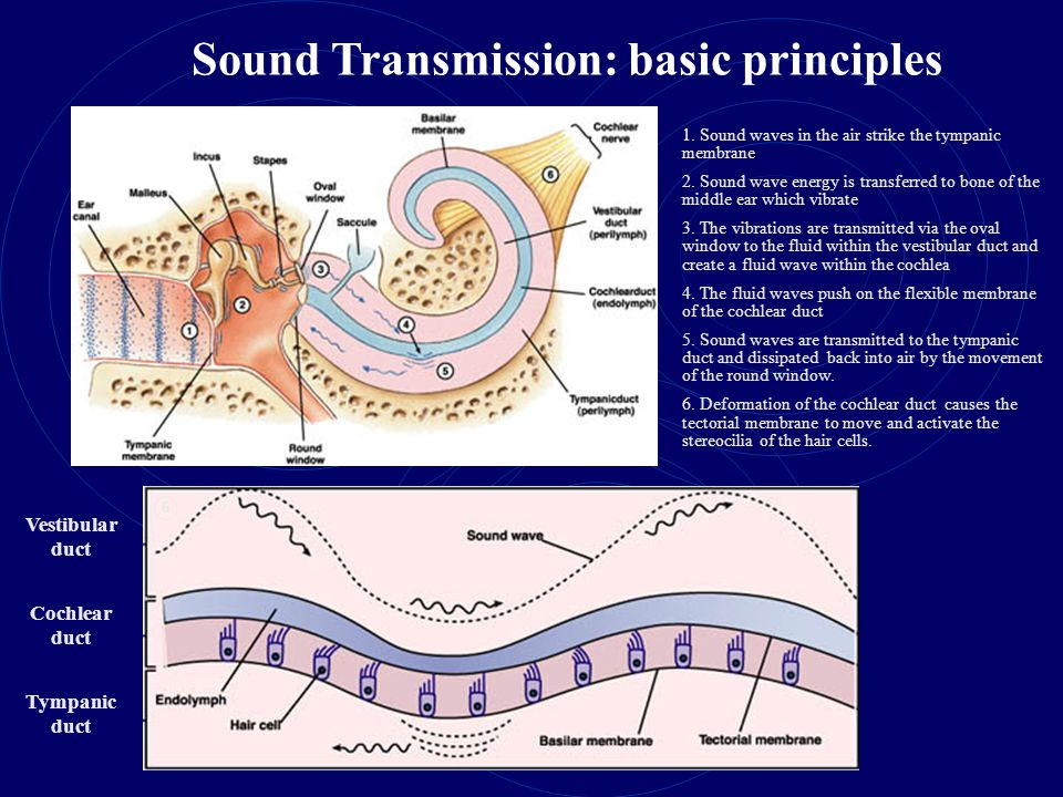 Sound Transmission: basic principles Vestibular duct Cochlear duct Tympanic duct 1.