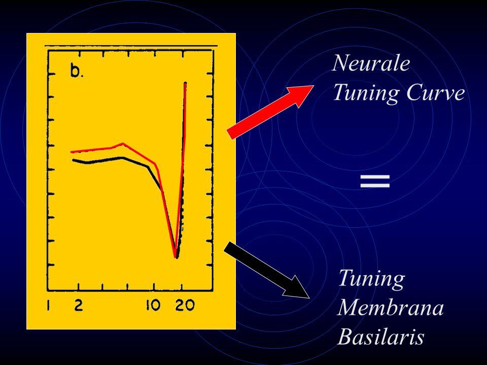 Tuning Membrana Basilaris Neurale Tuning Curve =