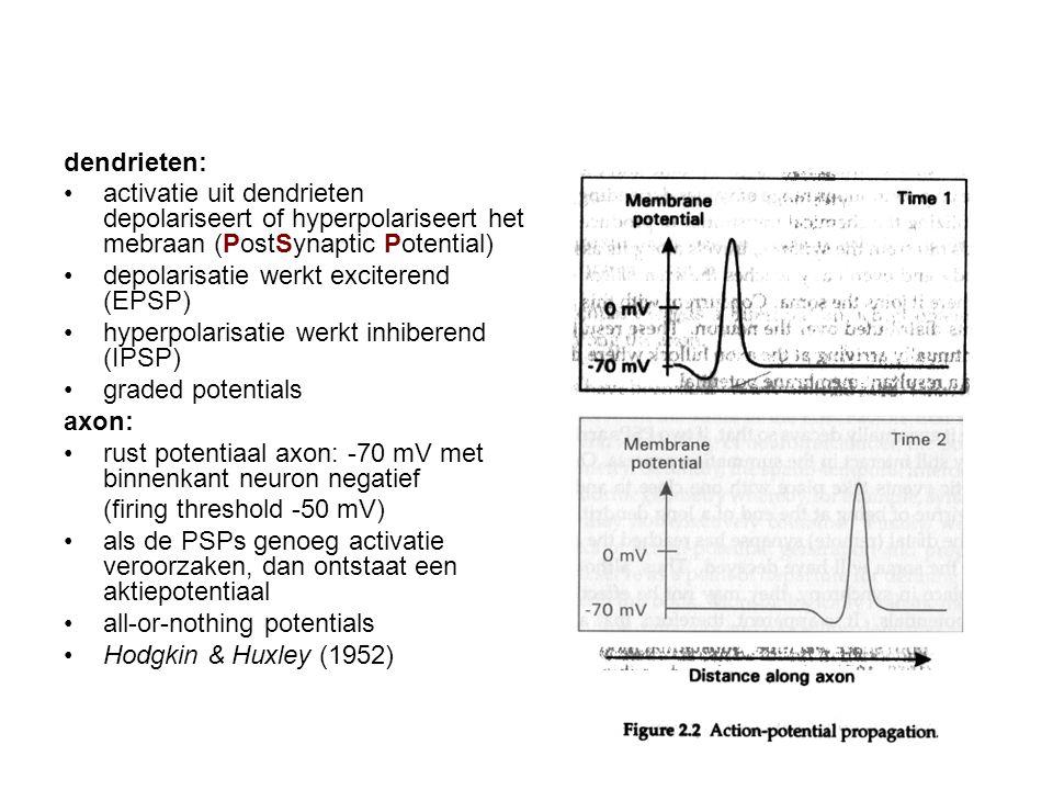 dendrieten: activatie uit dendrieten depolariseert of hyperpolariseert het mebraan (PostSynaptic Potential) depolarisatie werkt exciterend (EPSP) hype