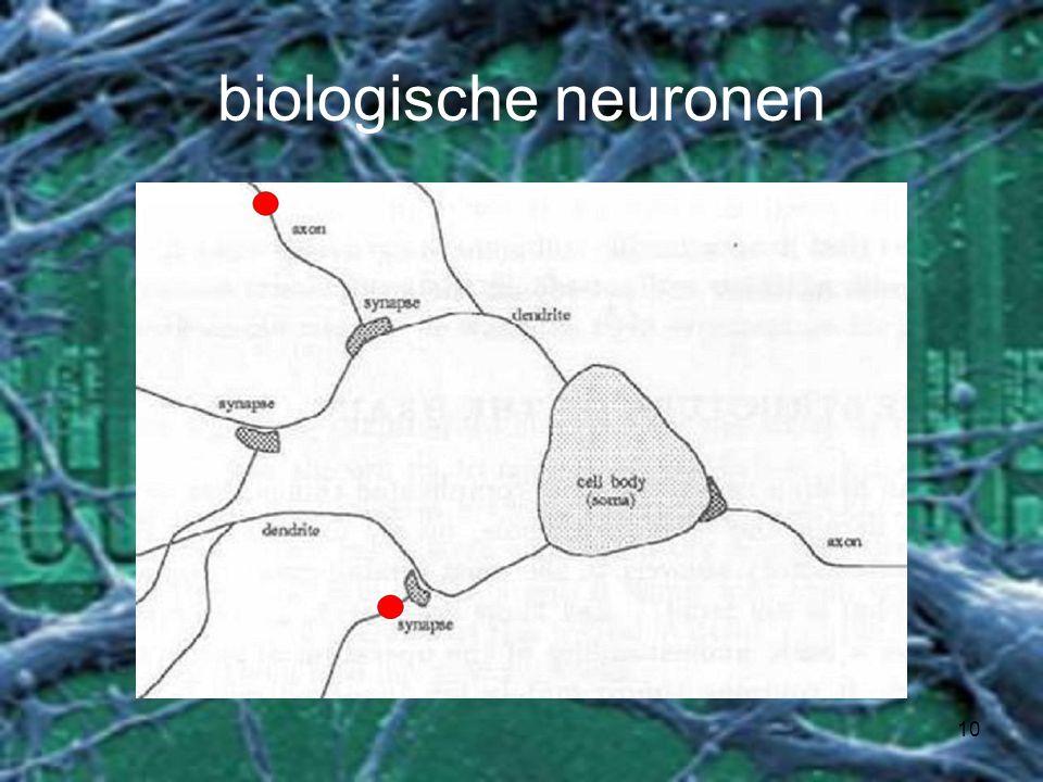 10 biologische neuronen