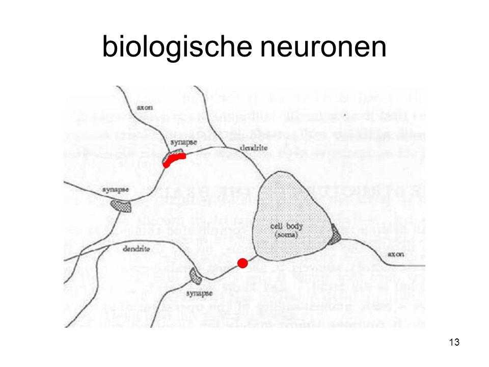13 biologische neuronen