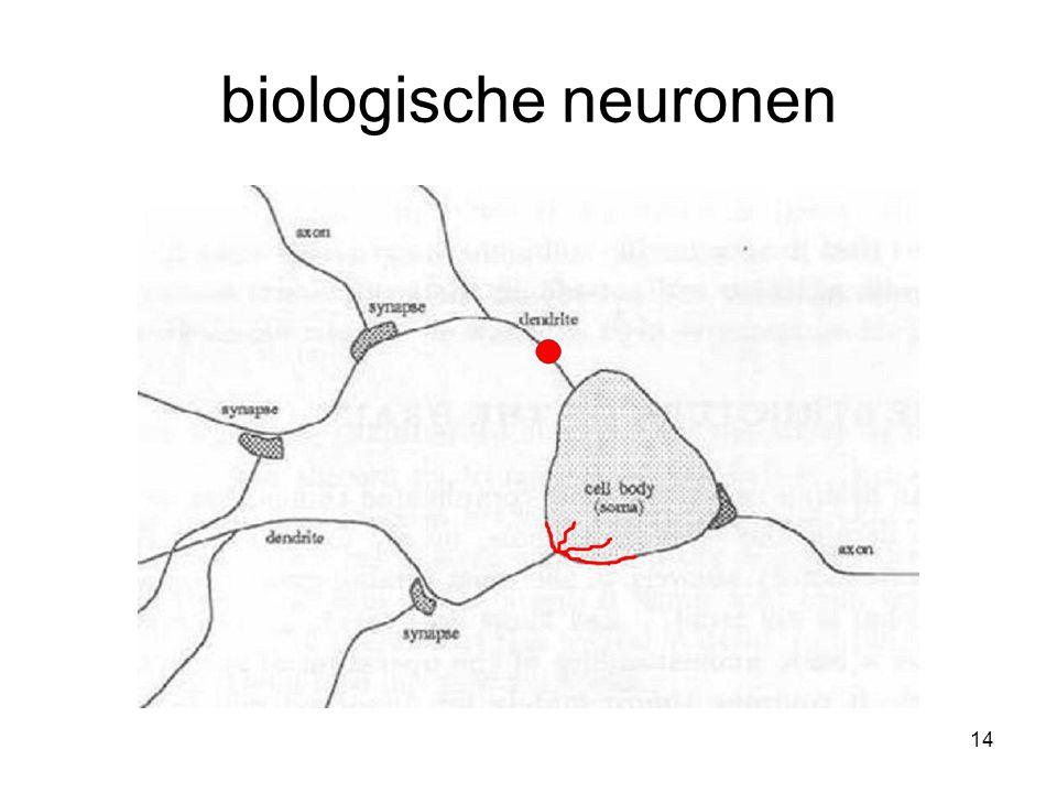 14 biologische neuronen