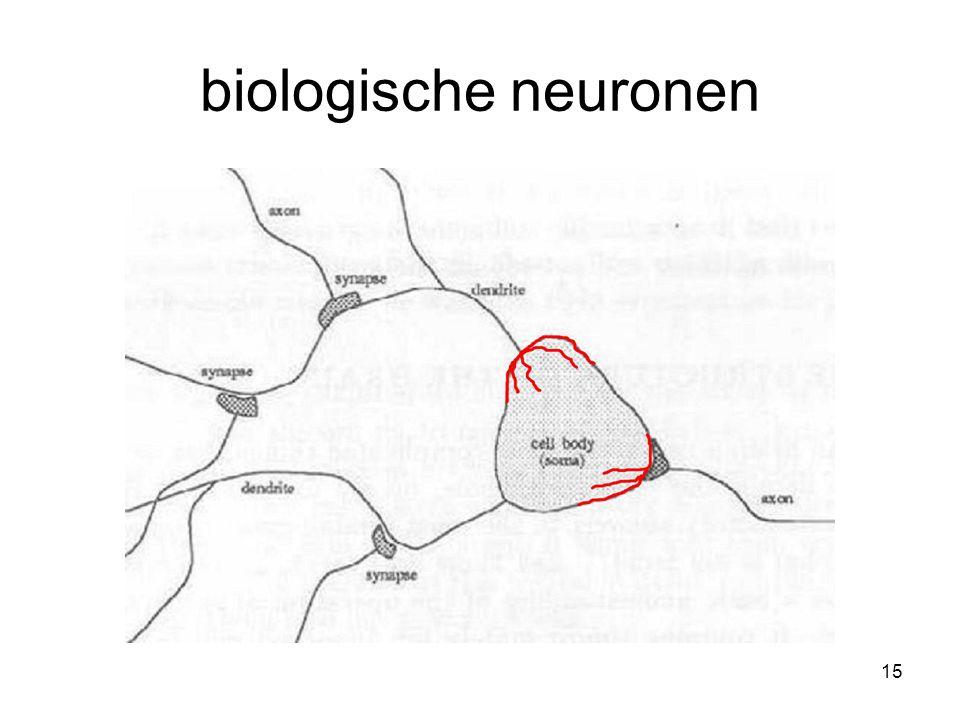 15 biologische neuronen