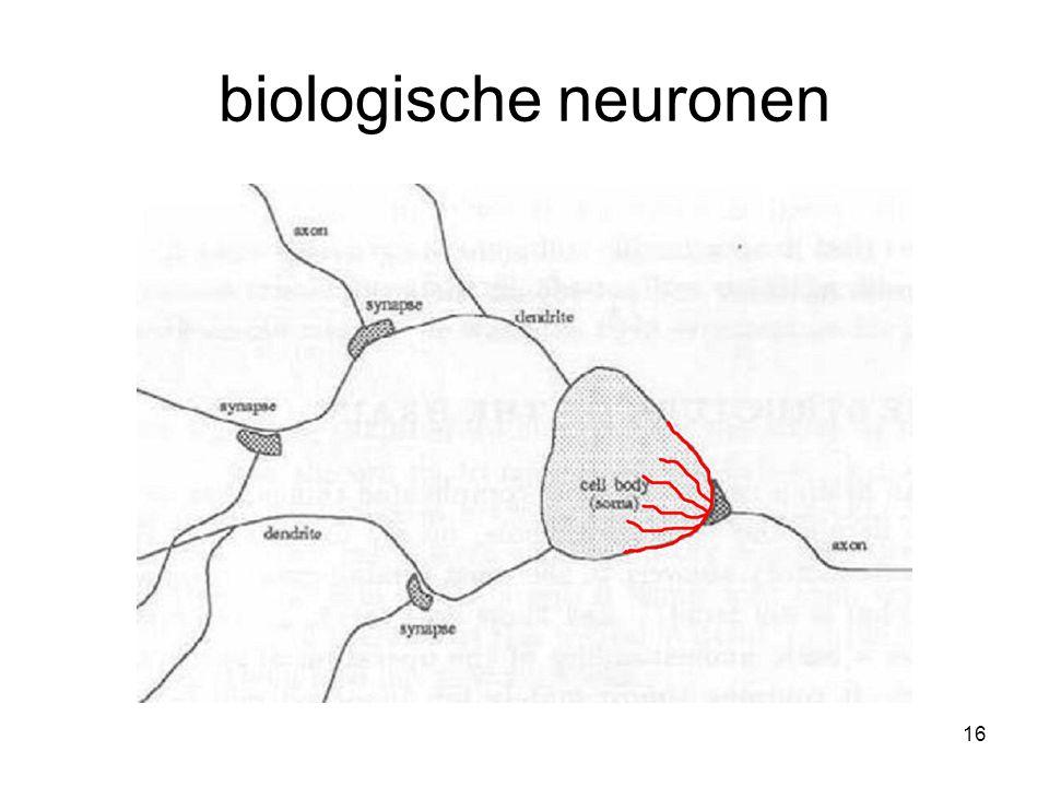 16 biologische neuronen