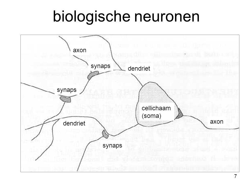 7 biologische neuronen axon synaps dendriet axon synaps cellichaam (soma)