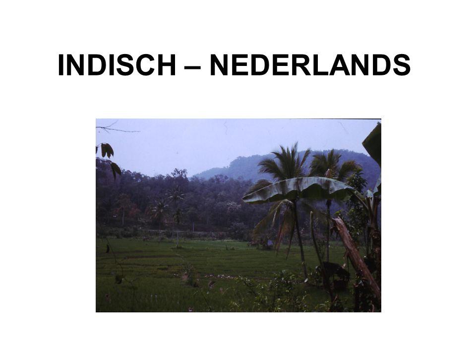 OVERZICHT Indische – Nederlanders positie Nederlands voorgeschiedenis en ontwikkeling kenmerken Indisch- Nederlands Petjoh Indië is niet meer