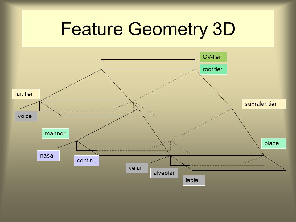 Feature Geometry 3D CV-tier root tier lar. tier supralar.