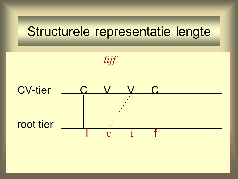 Structurele representatie lengte lijf CV-tierCVVC root tier l   f