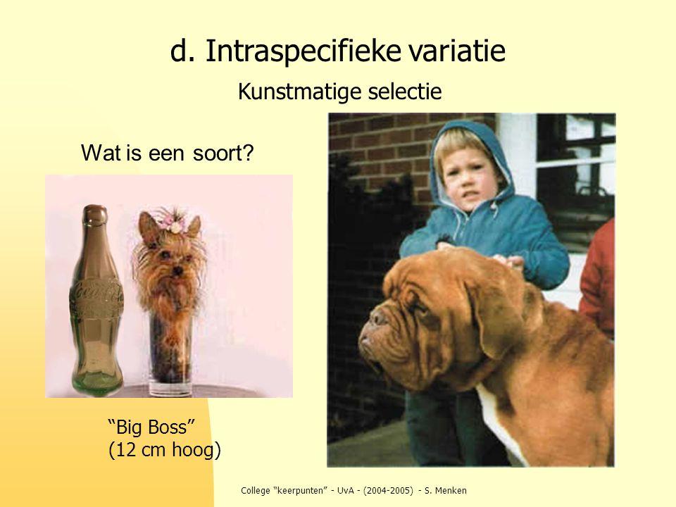 """College """"keerpunten"""" - UvA - (2004-2005) - S. Menken d. Intraspecifieke variatie Kunstmatige selectie """"Big Boss"""" (12 cm hoog) Wat is een soort?"""