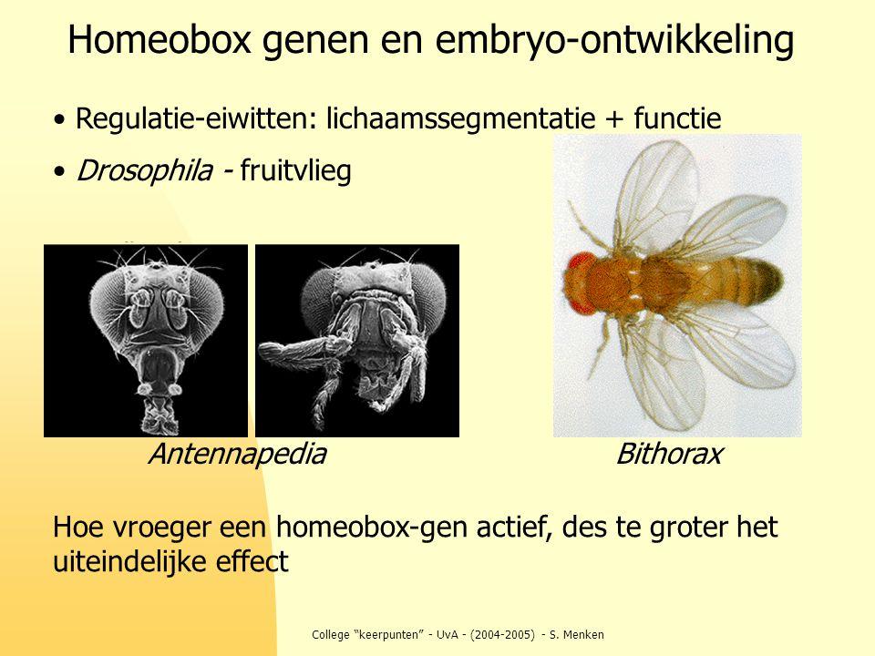 """College """"keerpunten"""" - UvA - (2004-2005) - S. Menken Homeobox genen en embryo-ontwikkeling Antennapedia Bithorax Regulatie-eiwitten: lichaamssegmentat"""