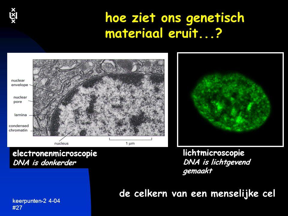 keerpunten-2 4-04 #28 bij celdeling worden chromosomen zichtbaar