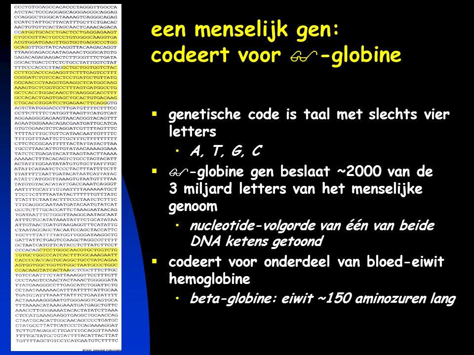 keerpunten-2 4-04 #50 genetische informatie een simpele lineaire code