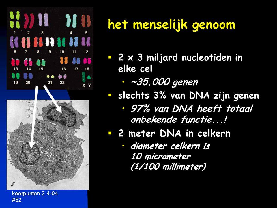 keerpunten-2 4-04 #53 2 meter DNA per celkern van 1/100 mm doorsnee  equivalent 20 km draad in een tennisbal (10 cm) gemiddeld gen ~2 cm  toch efficiënt gen aan/uit zetten vind 2 cm gen op 20 km draad...!