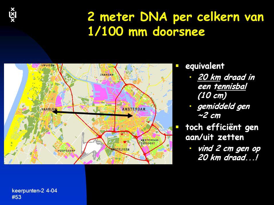 keerpunten-2 4-04 #54 nog een een rekensom  2 meter DNA per menselijke cel  mens: meer dan 75 miljard cellen totaal 75 x 2 x 10 9 meter  alle DNA moleculen uit één mens achter elkaar 150 miljoen km DNA...