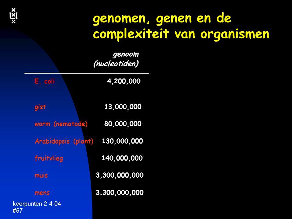 keerpunten-2 4-04 #58 genomen, genen en de complexiteit van organismen genoom genen neurons (nucleotiden) E.