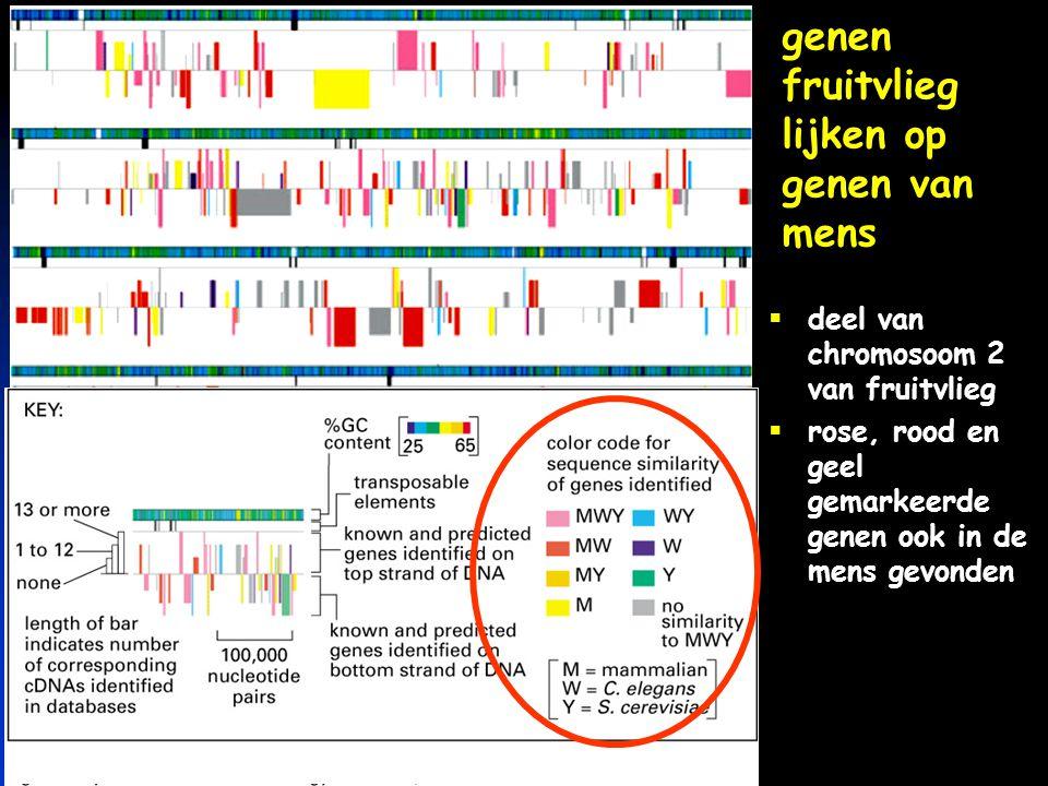 keerpunten-2 4-04 #63 menu  biologische netwerken  genetische informatie: DNA  lezen van genetische taal  hoeveel DNA is nodig  gebruiken van DNA  meer dan DNA alleen
