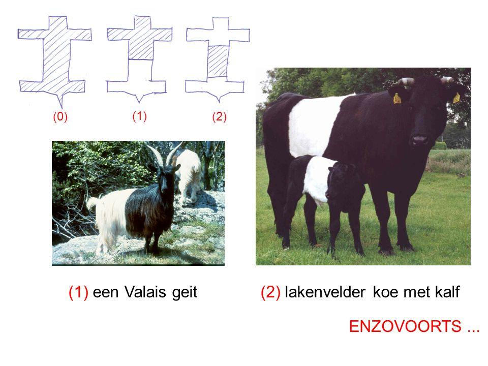 (1) (0) (2) (1) een Valais geit(2) lakenvelder koe met kalf ENZOVOORTS...