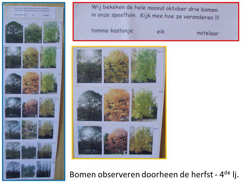 Bomen observeren doorheen de herfst - 4 de lj.