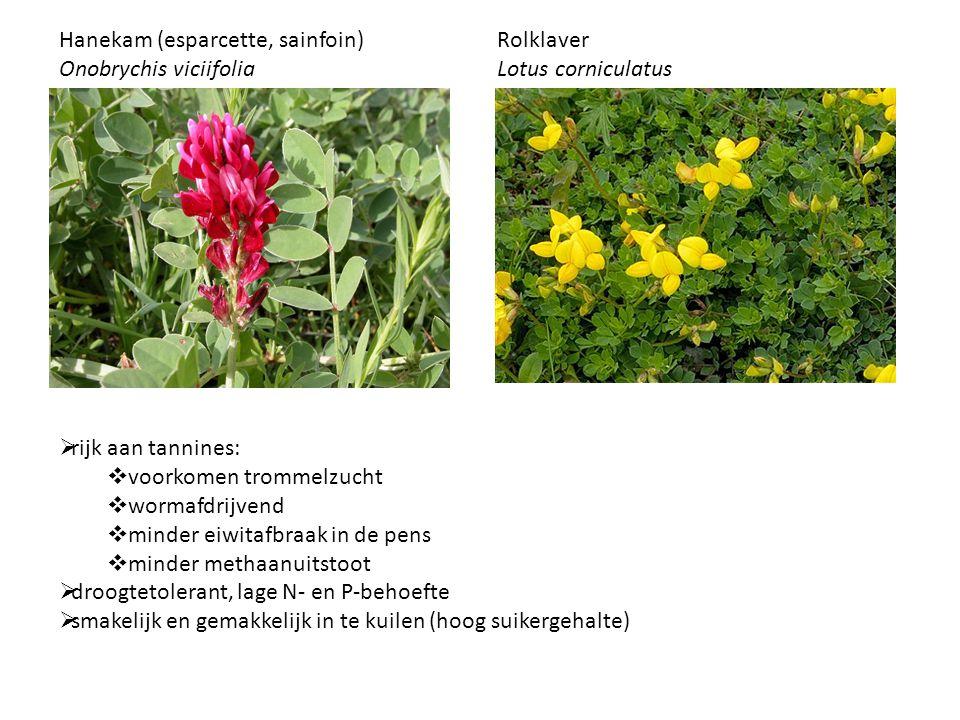 Hanekam (esparcette, sainfoin) Onobrychis viciifolia Rolklaver Lotus corniculatus  rijk aan tannines:  voorkomen trommelzucht  wormafdrijvend  min