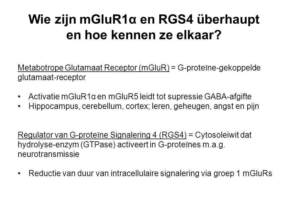 Wie zijn mGluR1α en RGS4 überhaupt en hoe kennen ze elkaar? Metabotrope Glutamaat Receptor (mGluR) = G-proteïne-gekoppelde glutamaat-receptor Activati