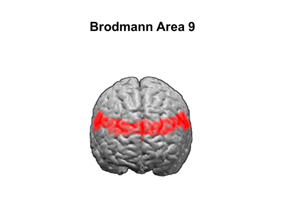 Brodmann Area 9
