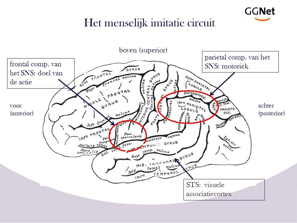 Het menselijk imitatie circuit voor (anterior) achter (posterior) boven (superior) STS: visuele associatiecortex parietal comp. van het SNS: motoriek