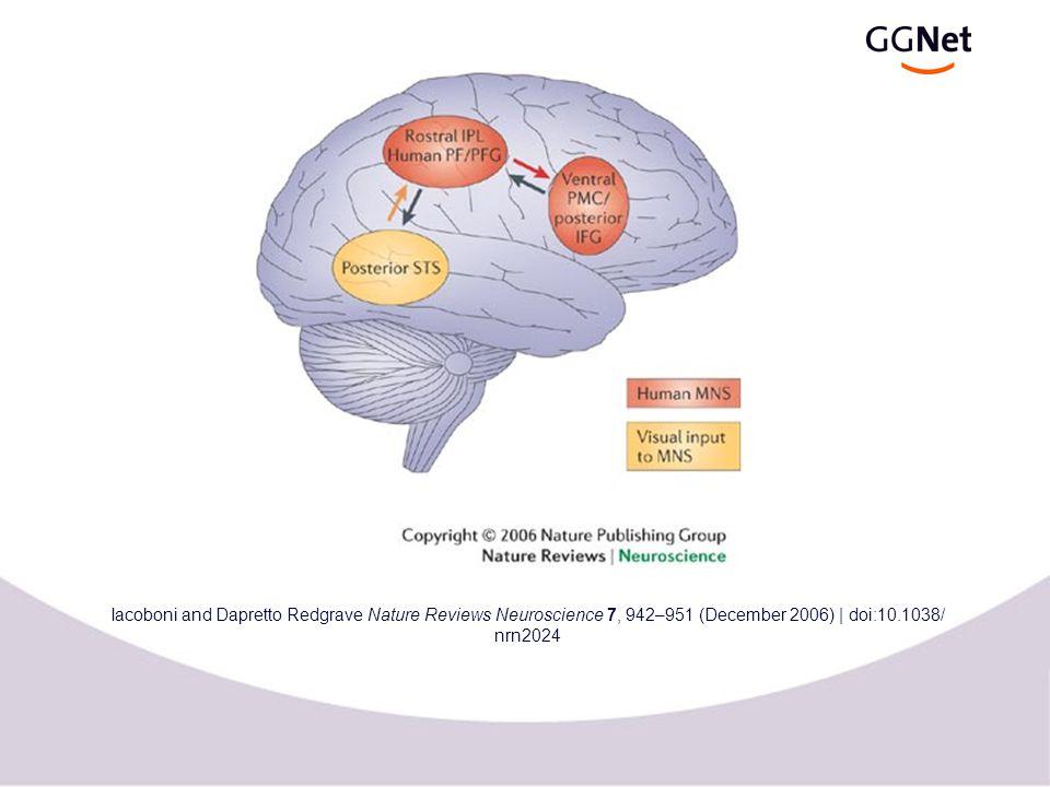 Spiegelneuronen bij primaten  Uit onderzoek met TMS, PET and fMRI…  spiegel neuronen 'vuren' bij doelgerichte bewegingen  spiegel neuronen 'vuren' bij de observatie van een vergelijkbare beweging  spiegel neuronen 'vuren' niet bij de observatie van 'pantomime'  spiegel neuronen 'vuren' ook als de geobserveerde actie deels verborgen is