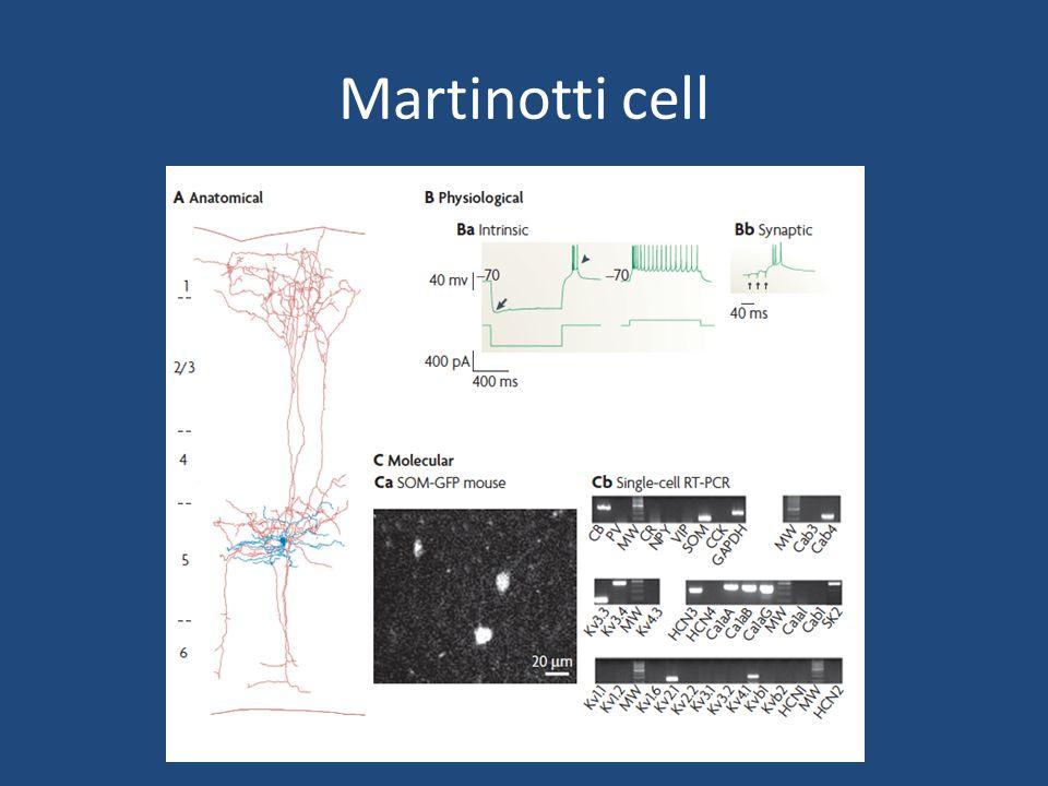 Andere GABAerge cellen