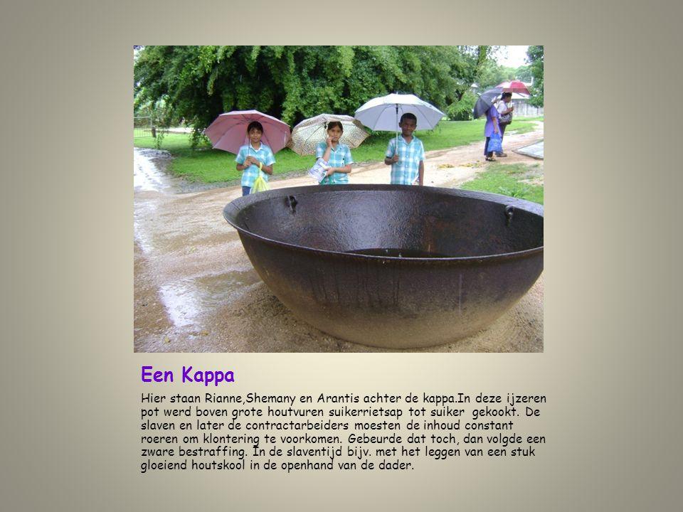 Een Kappa Hier staan Rianne,Shemany en Arantis achter de kappa.In deze ijzeren pot werd boven grote houtvuren suikerrietsap tot suiker gekookt. De sla