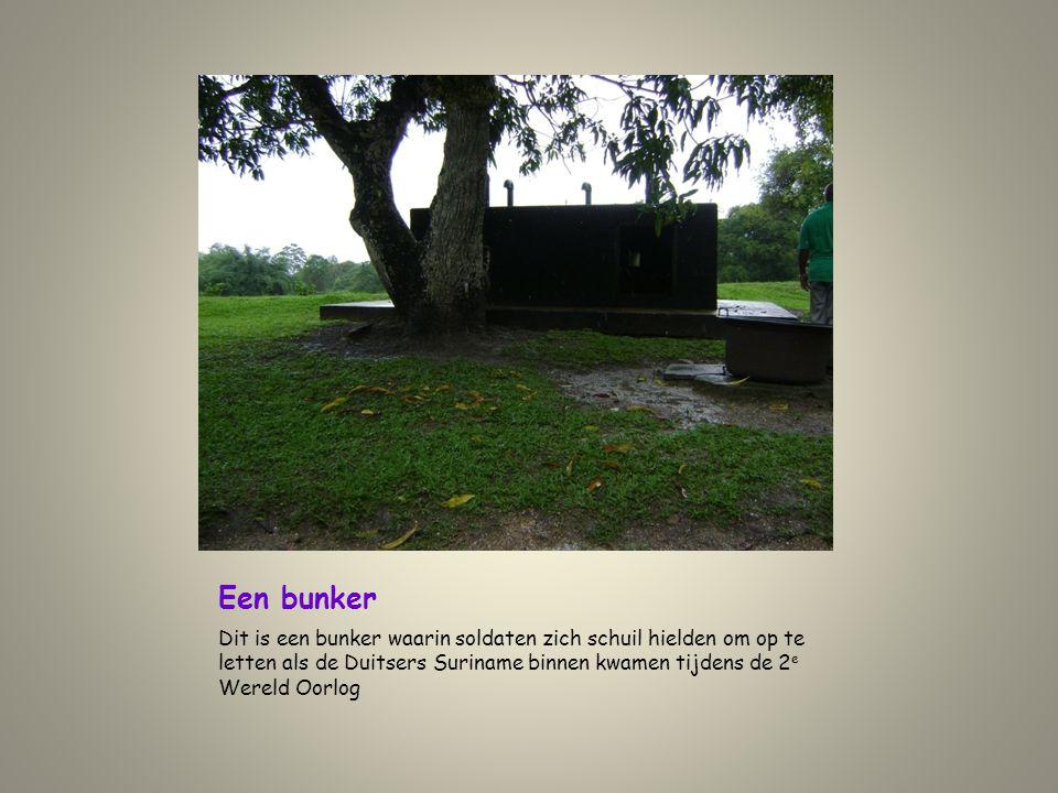 Een bunker Dit is een bunker waarin soldaten zich schuil hielden om op te letten als de Duitsers Suriname binnen kwamen tijdens de 2 e Wereld Oorlog