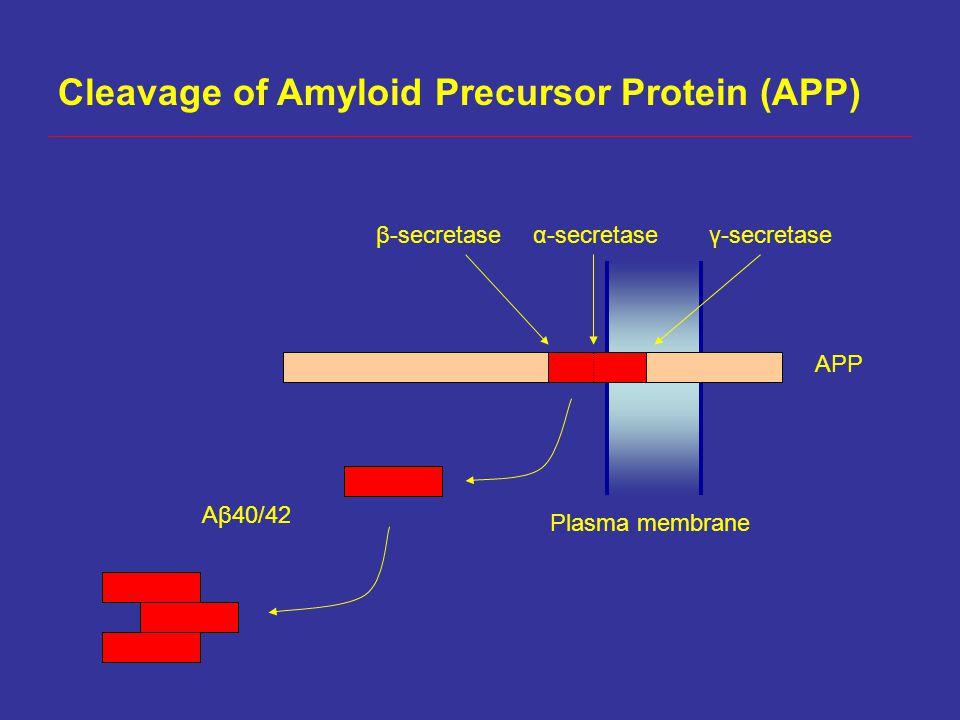 Cleavage of Amyloid Precursor Protein (APP) Plasma membrane APP β-secretaseγ-secretase α-secretase Aβ40/42