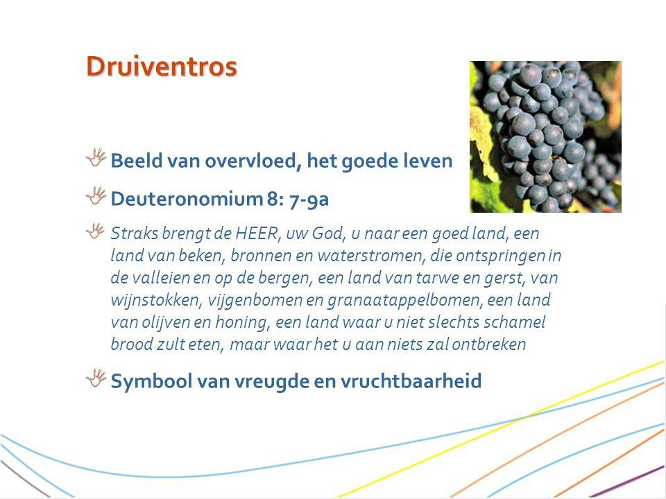 Druiventros Beeld van overvloed, het goede leven Deuteronomium 8: 7-9a Straks brengt de HEER, uw God, u naar een goed land, een land van beken, bronnen en waterstromen, die ontspringen in de valleien en op de bergen, een land van tarwe en gerst, van wijnstokken, vijgenbomen en granaatappelbomen, een land van olijven en honing, een land waar u niet slechts schamel brood zult eten, maar waar het u aan niets zal ontbreken Symbool van vreugde en vruchtbaarheid