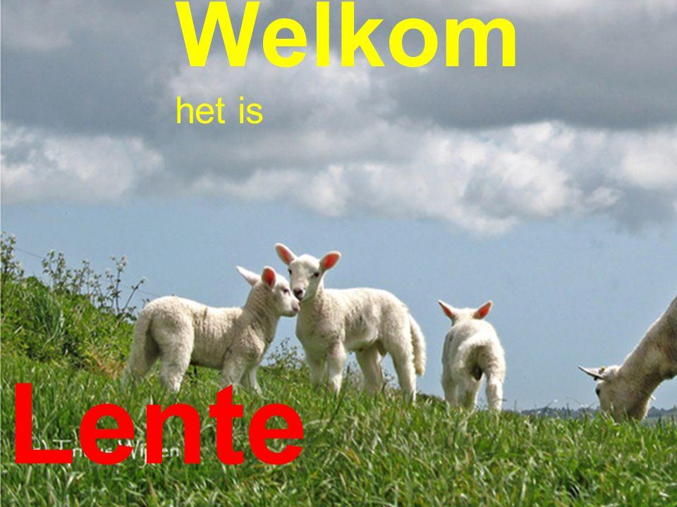 Welkom het is Lente