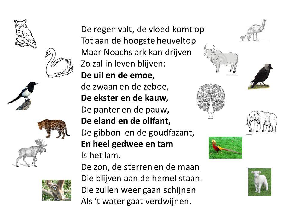 De regen valt, de vloed komt op Tot aan de hoogste heuveltop Maar Noachs ark kan drijven Zo zal in leven blijven: De uil en de emoe, de zwaan en de zeboe, De ekster en de kauw, De panter en de pauw, De eland en de olifant, De gibbon en de goudfazant, En heel gedwee en tam Is het lam.