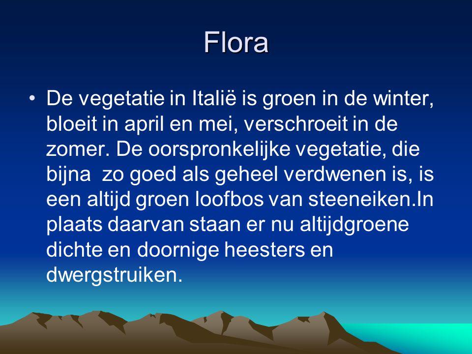 Flora De vegetatie in Italië is groen in de winter, bloeit in april en mei, verschroeit in de zomer. De oorspronkelijke vegetatie, die bijna zo goed a