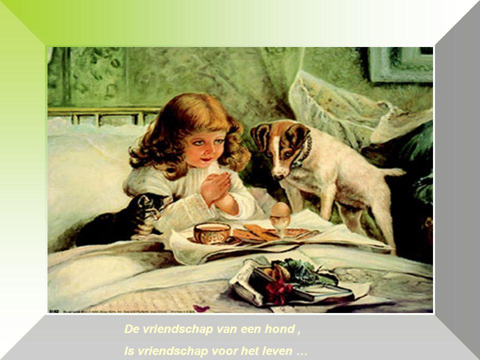 made by beppowerpointsite-bep De vriendschap van een hond, Is vriendschap voor het leven …